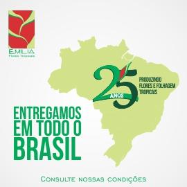 Entregamos Brasil